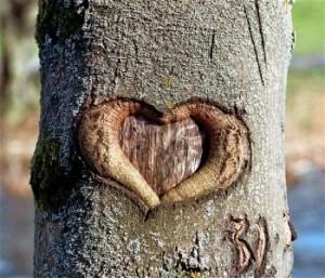 Srce u drvetu