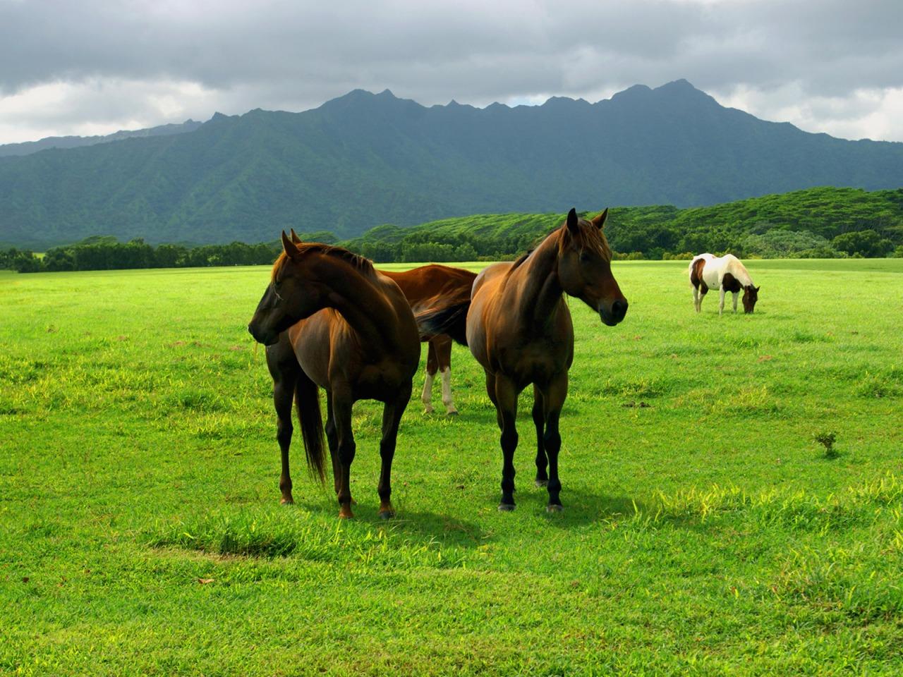 Konj u prirodi
