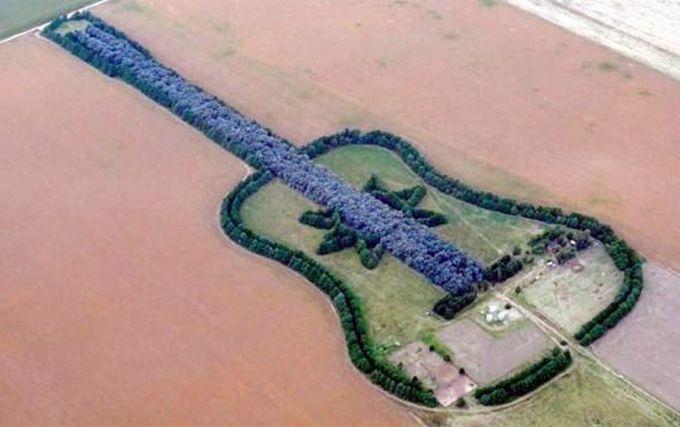 Gitara šuma,foto:telegraf.rs