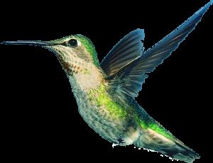 kolibriwebdesign.com