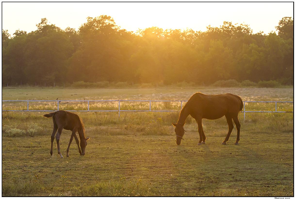 konj, ždrebe, poljana, ograda, sunce, drveće