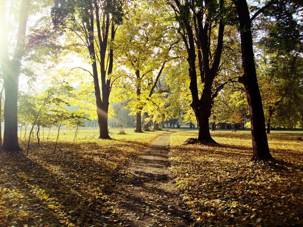 jesen,šuma,park,lišće,listopad
