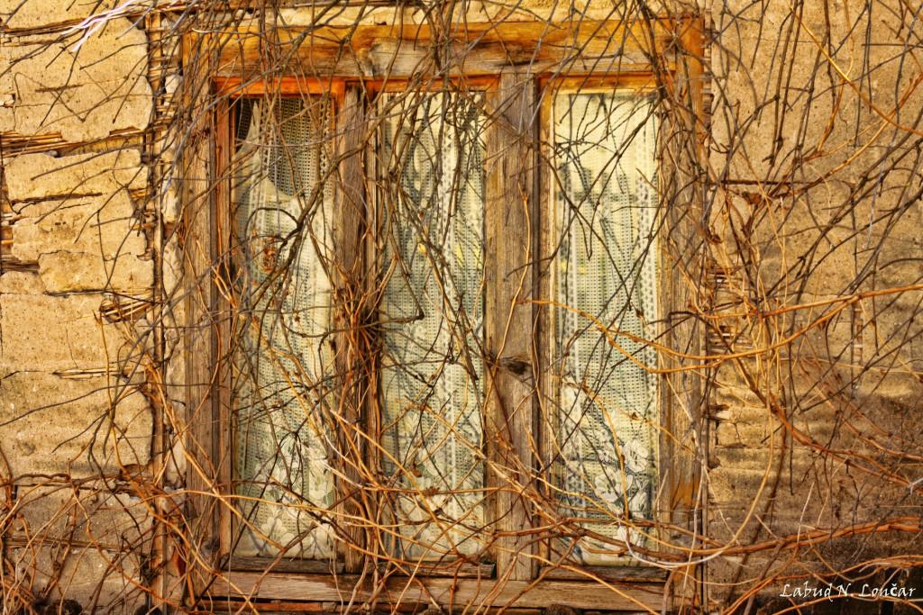 Foto: Labud N. Lončar