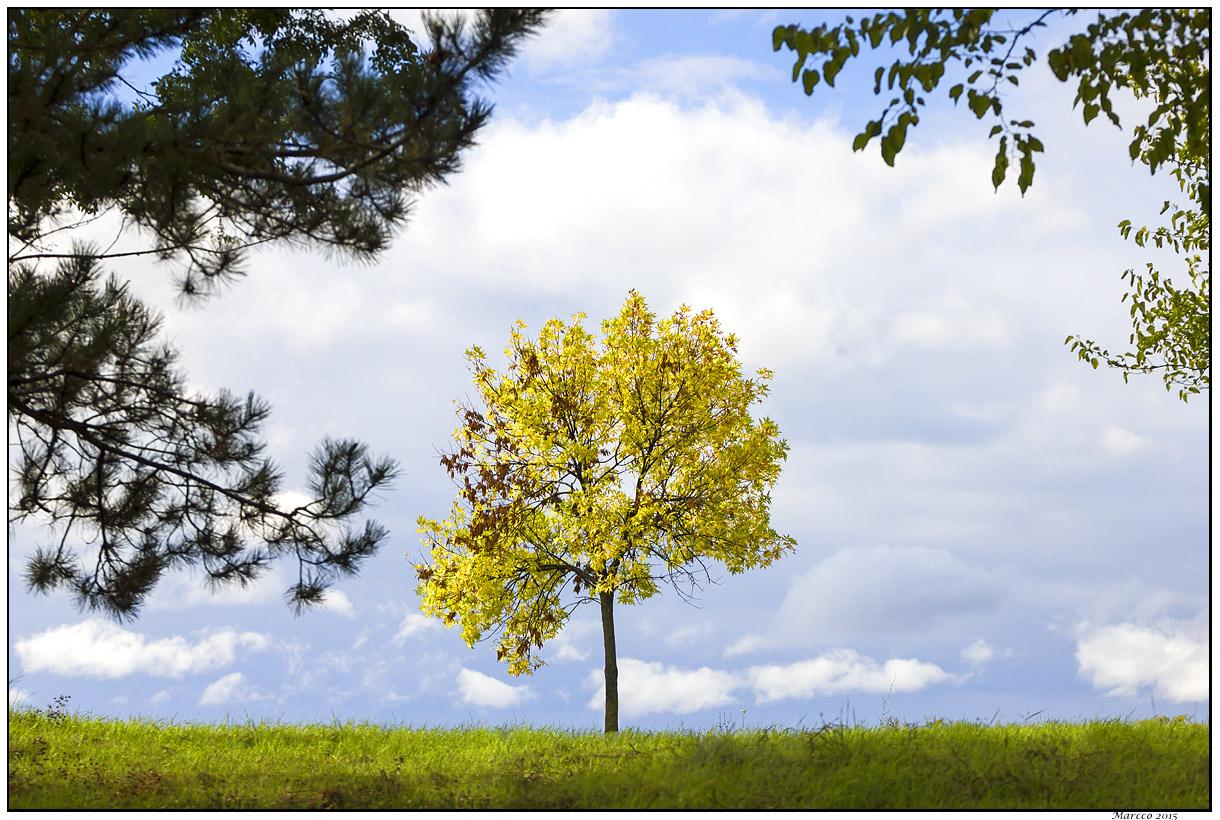 drvo, zelenilo, trava, oblaci, nebo