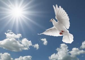 flying-pigeon-hd-wallpapers-new-desktop-beautiful-images-of-pigeon-birds-free-download