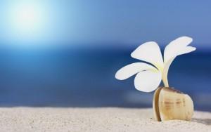 flower_white_shell_sand_beach