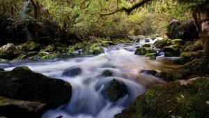 water_stream_river_stones_wood_moss_vegetation_14614_1920x1080